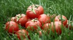 Eight Surprising and Amazing Health Benefits of Tomatoes